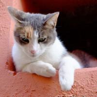 ベルナッツァの猫 - 岡田光世